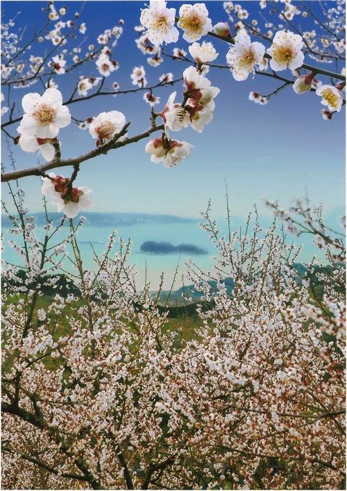 梅畑から見たみなべの風景